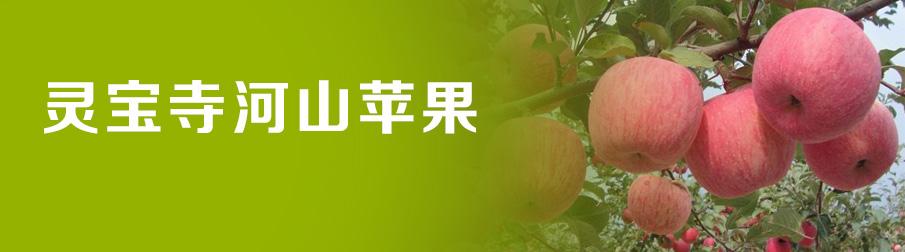 灵宝寺河山苹果专卖网 - 灵宝寺河山苹果